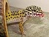 Gecko999.jpg