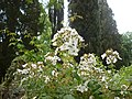 Giardino di Ninfa 115.jpg