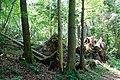 Gleißental-bjs180519-03.jpg