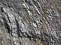 Gneiss (Archean; Norris South roadcut, Madison County, Montana, USA) 3 (44615258755).jpg