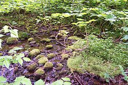 La Nature... dans NATURE 250px-Gold_Creek_Alaska_Lake_0299
