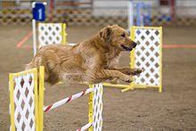 Dog Agility Training Redding Ca
