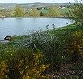 Golfplatz - panoramio (10).jpg
