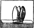 Goody Two-Shoes (1881)-30.png