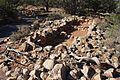Grand Canyon South Rim 2015 032.jpg