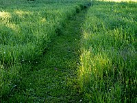 Grass path on field 20160719.jpg