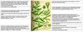 Gratiola officinalis Thome DESC.png
