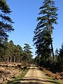 Gravel track in Milkham Inclosure, New Forest - geograph.org.uk - 330575.jpg