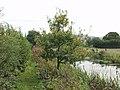 Great Oaks from little acorns grow (3) - geograph.org.uk - 576524.jpg