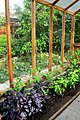 Greenhouse in Berkeley Cottage Garden 46.jpg