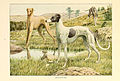 Greyhounds.jpg