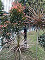 HK 中環 Central 遮打花園 Chater Garden flora green leaves n trees March 2020 SS2 32.jpg