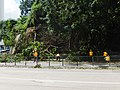 HK Wan Chai Queen's Road East fallen trees clean up Sept-2018.jpg