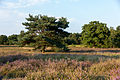 Haltern am See, Westruper Heide -- 2015 -- 7936.jpg