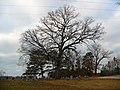 Hamilton, AL, USA - panoramio (3).jpg