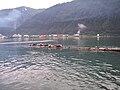 Harbor seals on Douglas breakwater.JPG