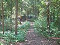 Harrisville state park trail 02.jpg
