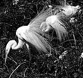 Herons at Gatorland - Andrea Westmoreland.jpg