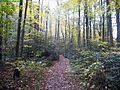 Hills-Creek-Trail ForestWander.JPG