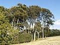 Hillside Copse - geograph.org.uk - 589417.jpg