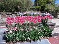 Hillwood Gardens in April (16975226124).jpg