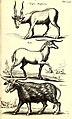 Historiae naturalis de quadrupetibus libri - cum aeneis figuris; (Historiae naturalis de serpentibus libri II; Historiae naturalis de insectis libri III; Historiae naturalis de exanguibus aquaticis (14564463530).jpg