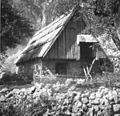 Hlev - Bavščica 26, pri Mišci 1952.jpg