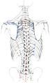 Holden's human osteology (1899) - Plt42.png