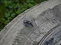 Hole in car tire 20190604.jpg
