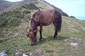 Horse Mount Baigura.jpg