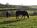 Horses, Cockington - geograph.org.uk - 752105.jpg