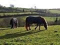 Horses, Cockington - geograph.org.uk - 752105.jpg