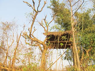 Toto people - Image: Hut used for living by the TOTO aboriginals