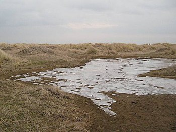English: Ice in the dunes At the end of a bitt...