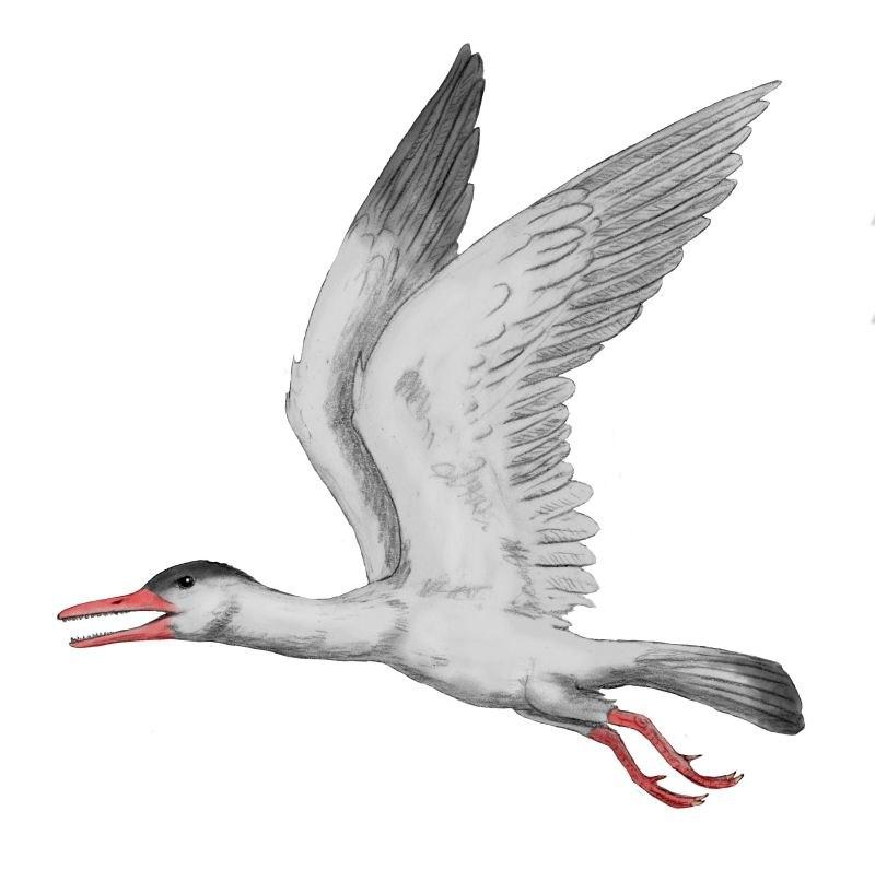 Ichthyornis BW