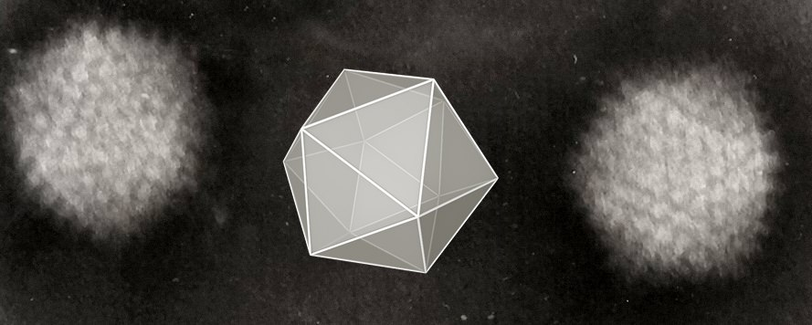 Icosahedral Adenoviruses