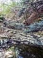 Il torrente Rio Freddo, quasi asciutto, alla Croce dei fossi, (Monte Cucco).jpg