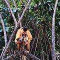 Ilha dos Macacos.jpg
