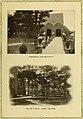 Illustrated bulletin (1917) (14598000838).jpg