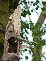 Ilsington Woods - geograph.org.uk - 748332.jpg