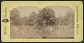 In the Ramble, Central Park, N.Y, from Robert N. Dennis collection of stereoscopic views.png