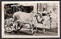 Indian men in an ox cart.jpg