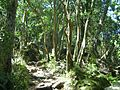 Indigenous afrotemperate forest at Newlands Cape Town 3.jpg