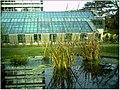 January Frost Botanic Garden Freiburg Gen Laboratory - Master Botany Photography 2014 - panoramio.jpg