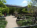 Jardin, Palais royal (28441904061).jpg