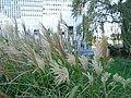 Jardin Atlantique @ Montparnasse @ Paris (30155218455).jpg