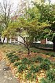 Jardin Pierre-Adrien Dalpayrat @ Paris (31018839361).jpg