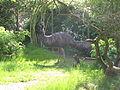 Jielbeaumadier emeus daustralie zoo praha 2010.jpeg