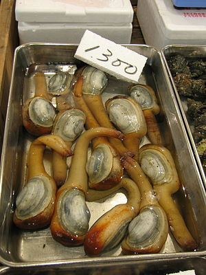 Geoduck - Geoduck for sale at Tsukiji fish market in Tokyo