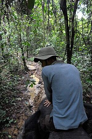 Gunung Leuser National Park - Elephant jungle patrol near Tangkahan